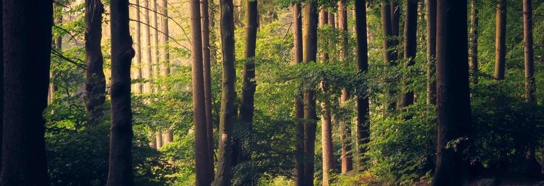 How nature can help us healing